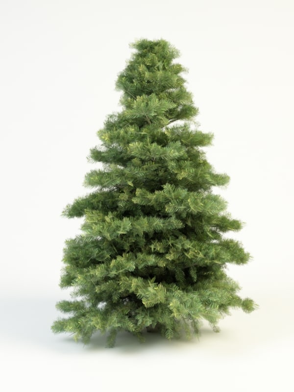 abies_concolor_small_1.jpg