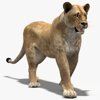 lioness animation cat max