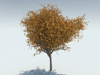 3d realistic maple tree model