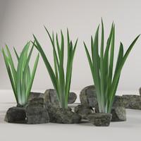stone plant 3d max