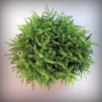 spruce 3d max
