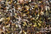 Seaweed_0003