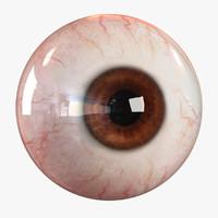 3d realistic human eye - model