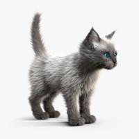 c4d kitten white