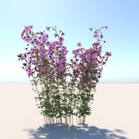3d dissotis canescens flower model