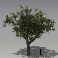 3dsmax oak tree