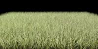 dynamic grasses 3d c4d