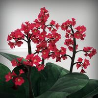 3d model bergenia plant