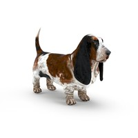 3ds max basset hound dog