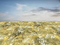 Beach foam 31