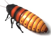 madagascar hissing cockroach beetle bug 3d max