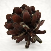 3d pinecone pine cone