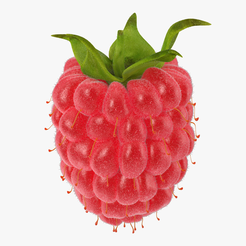 Raspberry 3d model 3 with Fur 00.jpg