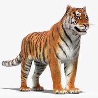 amur siberian tiger fur 3d dxf