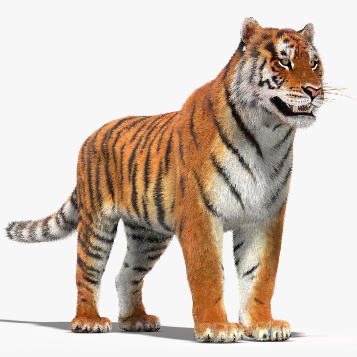 Tiger-01.jpg