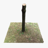 Tree Stump 2