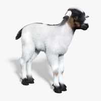 3d model baby goat white fur