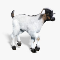 3d baby goat white fur model