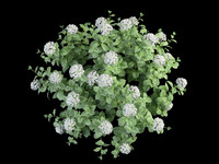 3ds max bush hortensia flowering 70