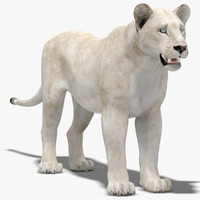 3d model lioness white
