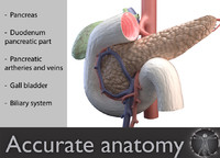 pancreas duodenum medical 3d model