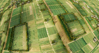 farmland birdview
