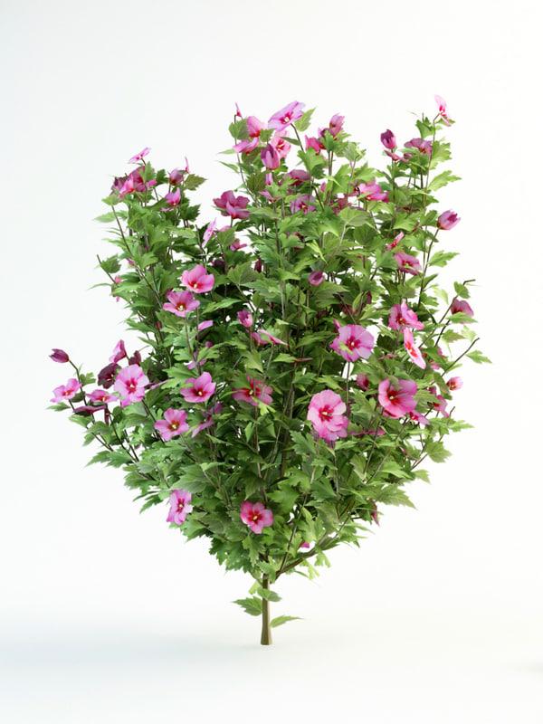 hibiscus _syriacus_120_2.jpg