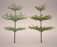3ds max bucida tree