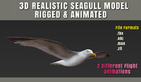 seagull animation fully rigged max