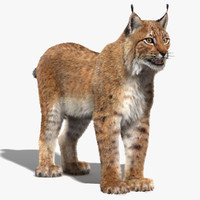 3d model eurasian lynx fur