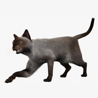 siamese cat xgen 3d model