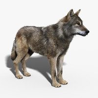 maya gray wolf fur