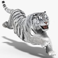 tiger amur white cat 3d model