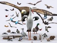 birds critters 3d model
