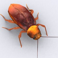cockroach critters 3d model