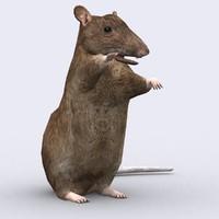 rat critters 3d model