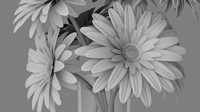 3d daisies flowers