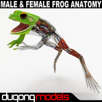 Male & Female Frog Anatomy Textured