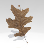 leaf fall dead 3d 3ds