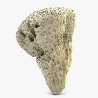 3d coral 3 model