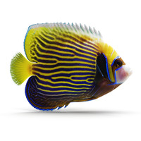 3ds emperor angelfish