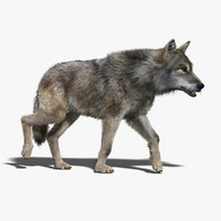 gray wolf fur rigged 3d max