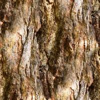 Tree bark 110