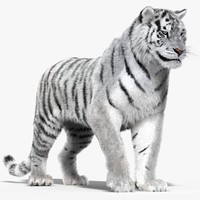 3d tiger white rigged cat model