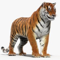 Tiger (Rigged, Fur)