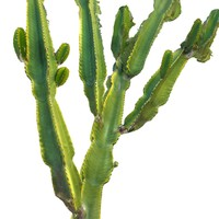real cactus 8k obj