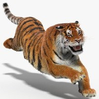 amur tiger fur cat 3d 3ds