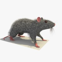 3d model grey mouse rat standing