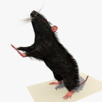 black mouse rat standing 3d model