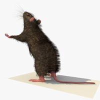 3d model brown mouse rat standing